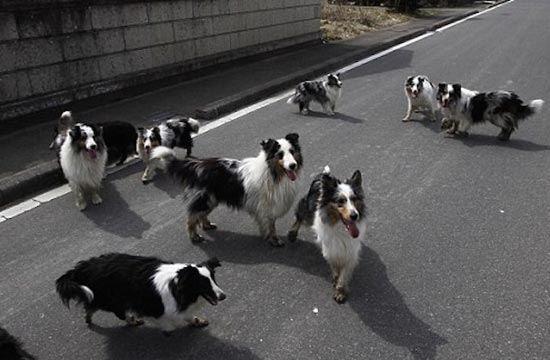 anjingeksperimen8