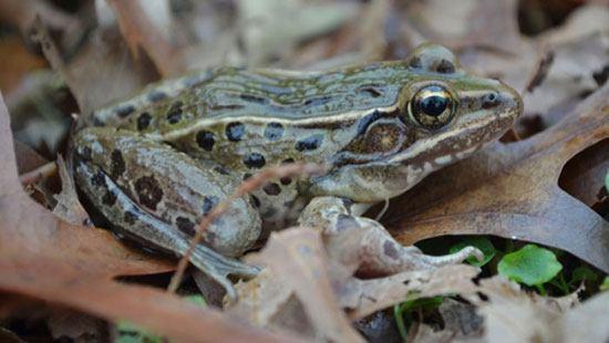 spesiesbaru1