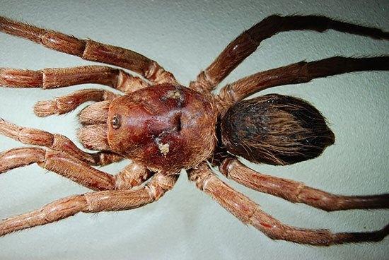 spesiesbaru3