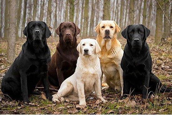 anjingterpintar4