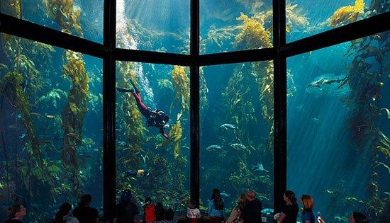 akuariumterbesar6
