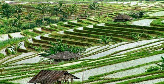 warisanindonesia1