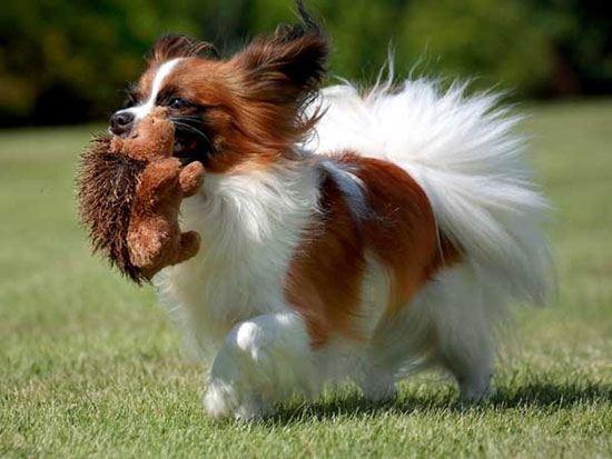 anjingterpintar6