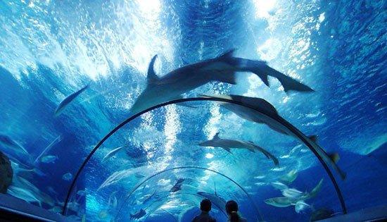 akuariumterbesar9